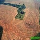 deforestacionbrasilsoja