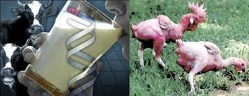 OGM Terror