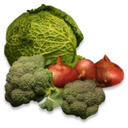 alimentos_ecologicos_invier1